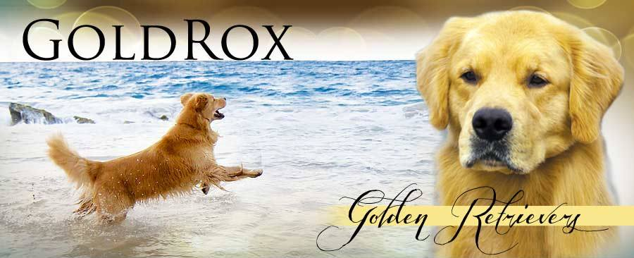 GoldRox Goldens